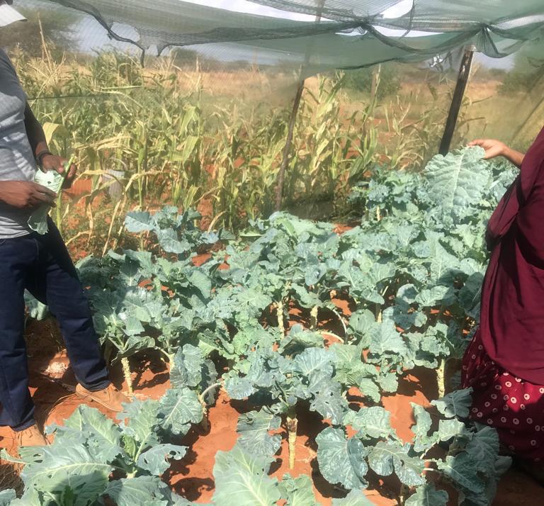 CCHO Welzijn Wajir Noordoost Kenia